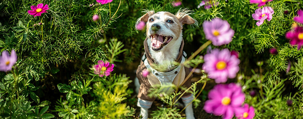 small dog in flowers