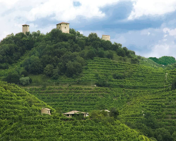 Perlage Wines: A Paradise for Environmentalists