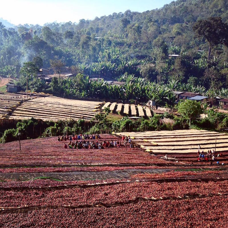 picture of coffee fields in ethiopia