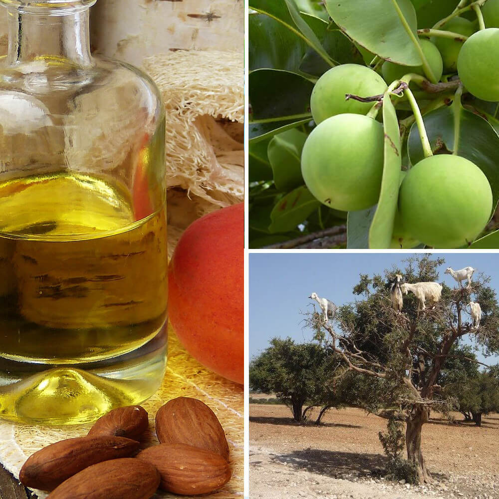 argan nuts, tree and oil
