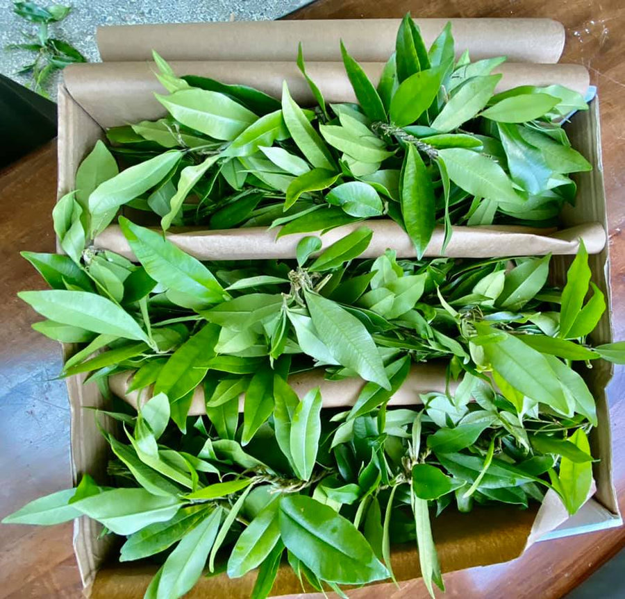 Traditional Maile Lei