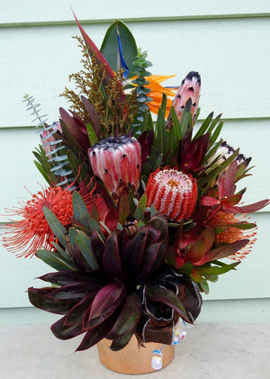The Hawaiian ~ with red ti leaf stem to plant