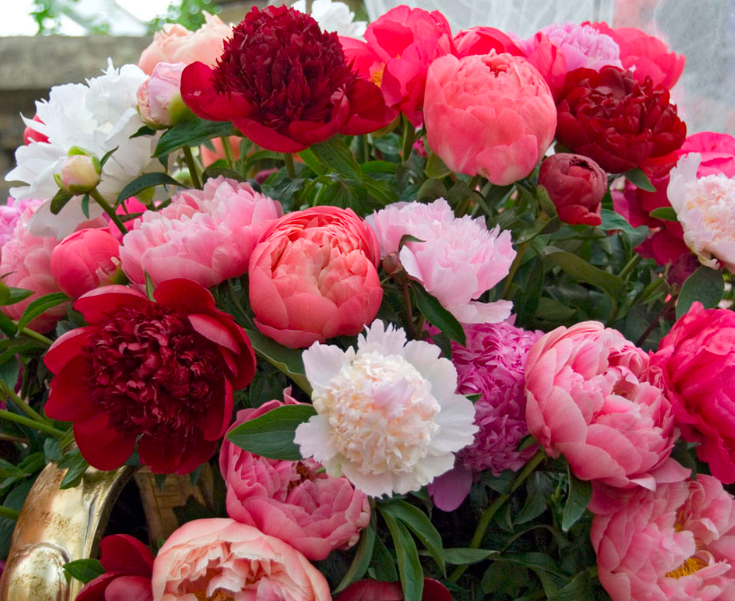 Peonies Bouquets - SOLD OUT UNTIL MARCH