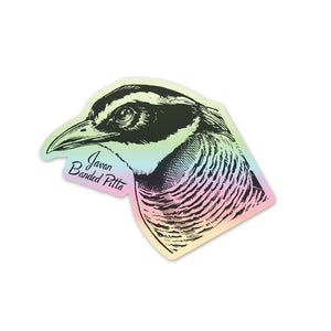 Holographic Javan Banded-Pitta Sticker