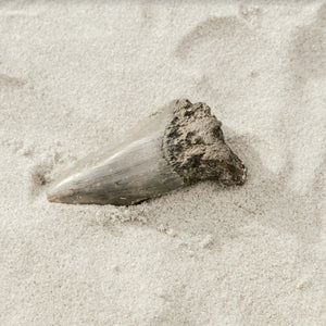 How Are Fossils Formed?: Everything You Need to Know