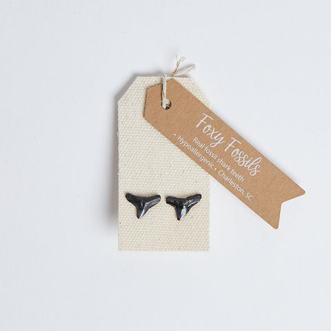 Natural Shark Tooth Stud Earrings - Foxy Fossils real fossil shark teeth stud earrings