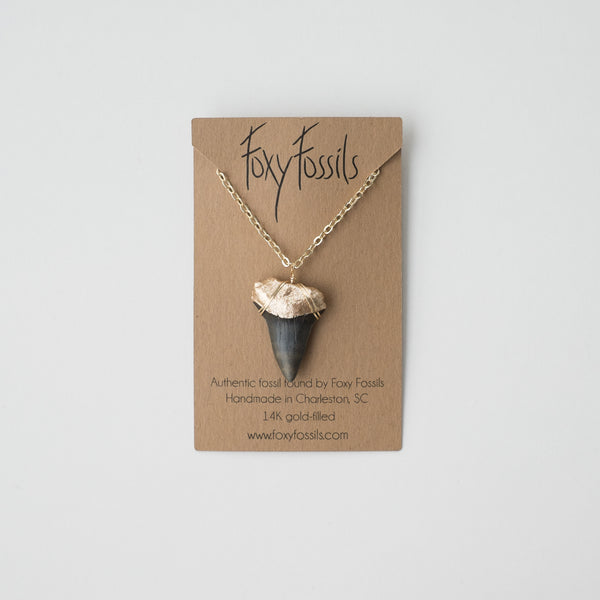 megalodon shark tooth necklace real with gold dipped root and on gold chain - foxy fossils