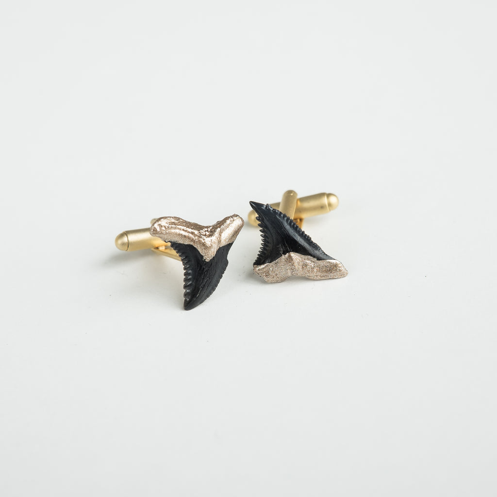real shark tooth cufflinks; gold tip hemipristis serra snaggletooth shark tooth cufflinks