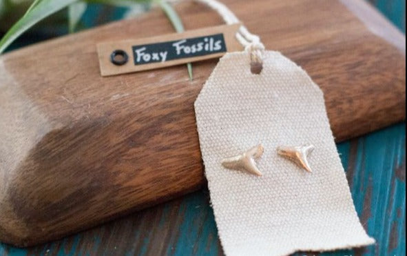 Gold Shark Tooth Stud Earrings - Foxy Fossils