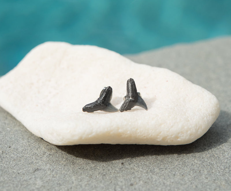 natural shark tooth fossil stud earrings