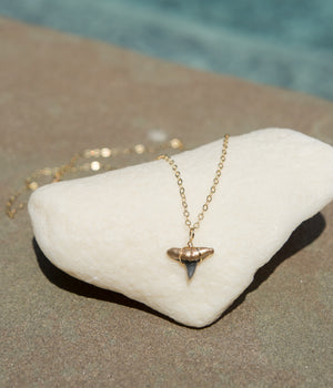 Gold-Tip Shark Tooth Necklace - Foxy Fossils