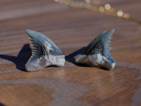 Men's Shark Tooth Cufflinks | Real Fossils — Foxy Fossils