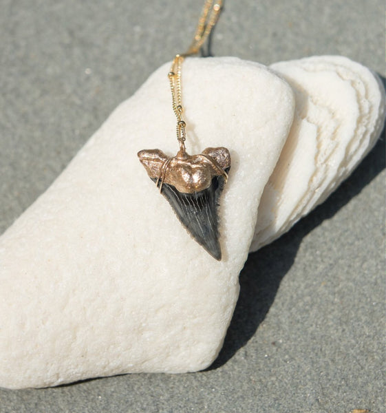Shark Tooth Necklace — Hemipristis Serra Fossil Tooth | Foxy Fossils
