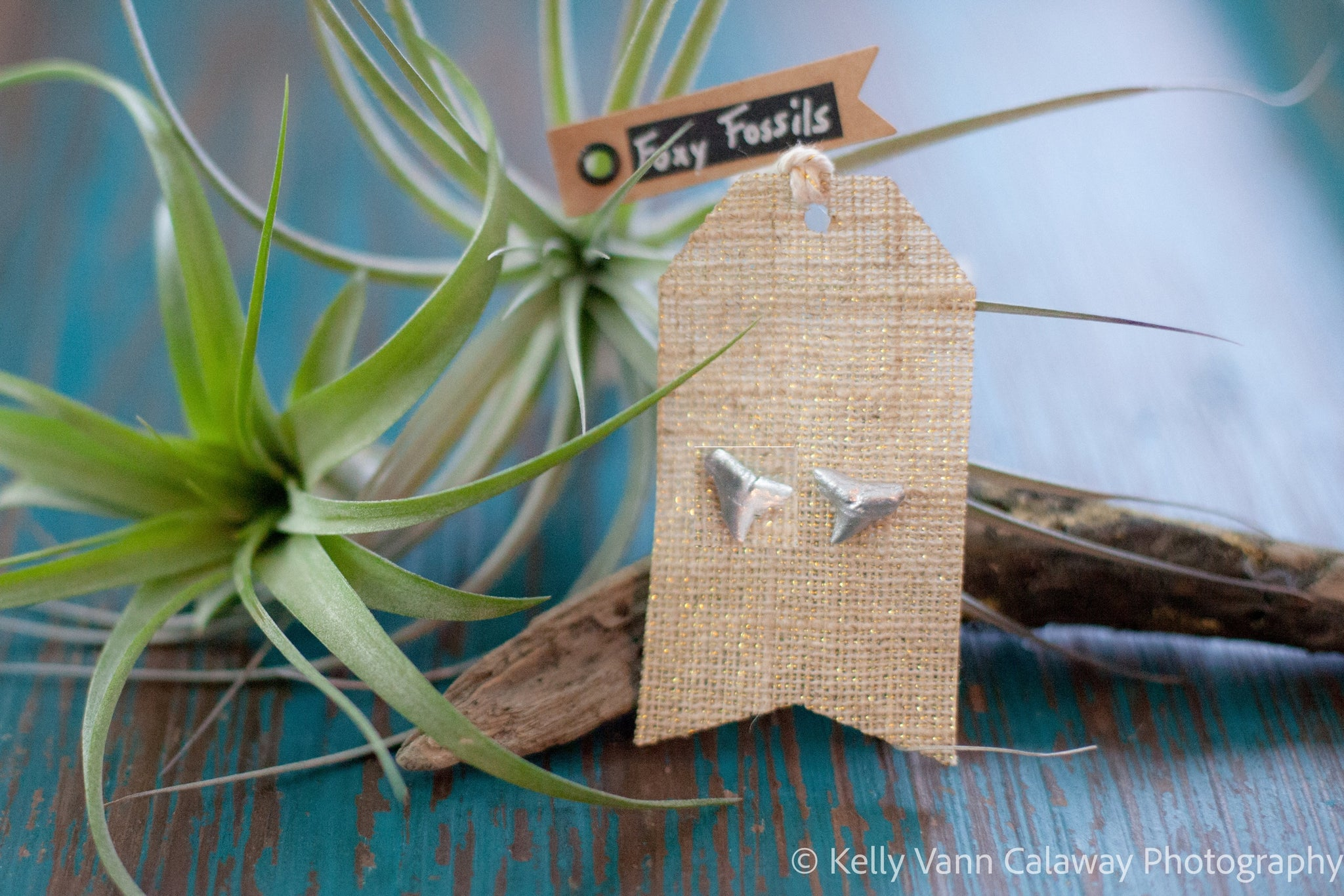 Silver Shark Tooth Stud Earrings