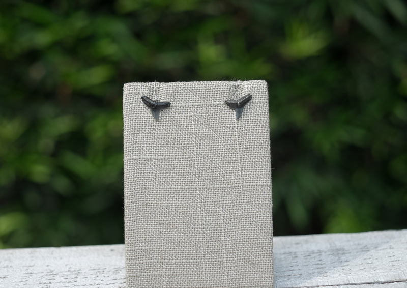 real fossil shark teeth stud earrings
