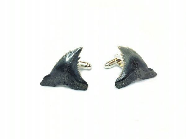 Real fossil shark teeth cufflinks with hemipristis serra shark teeth dating back millions of years in age