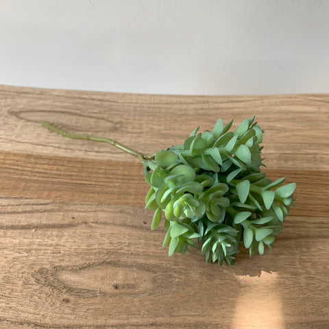 Soft Sedum Pick