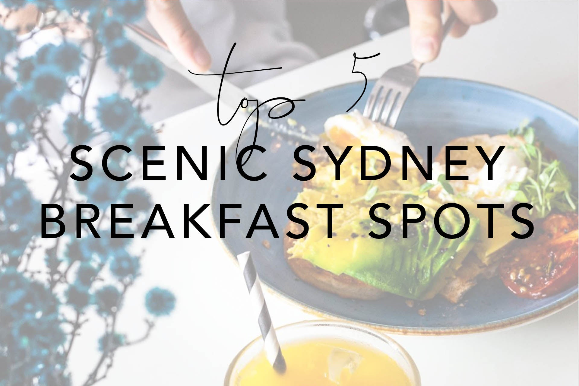 Top 5 SYDNEY Breakfast Spots Header