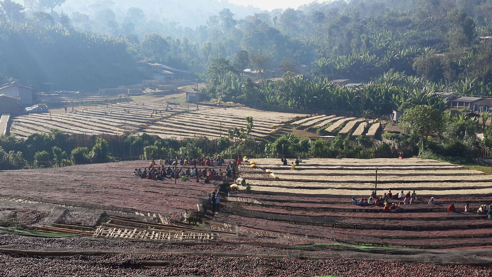 Coffee drying and processing at Ethiopia Aricha