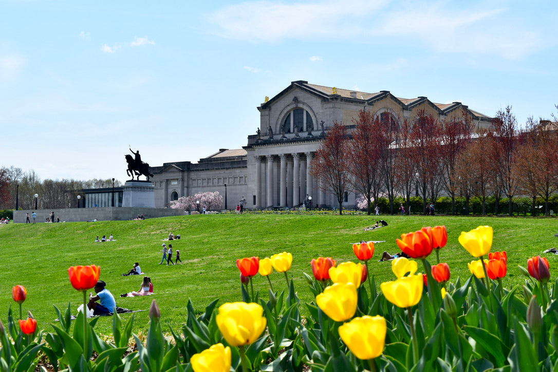 The Saint Louis Art Museum