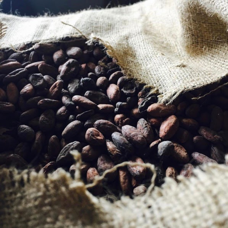 Cacao Beans in a Burlap Sack
