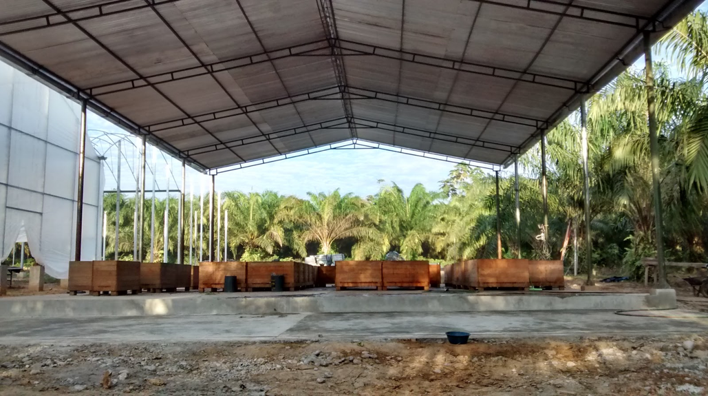 Cacao drying under a patio
