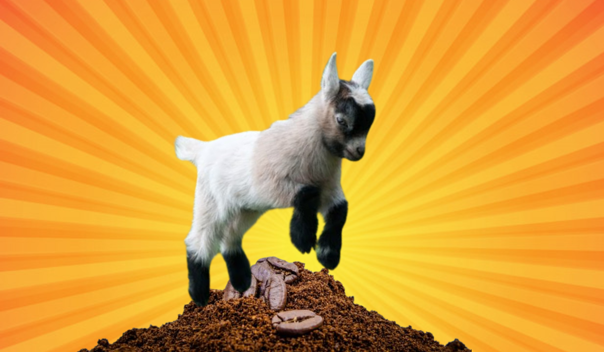 Using a Goat to Grind Coffee Beans