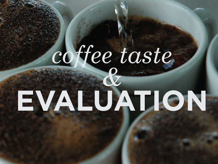 Coffee Taste & Evaluation