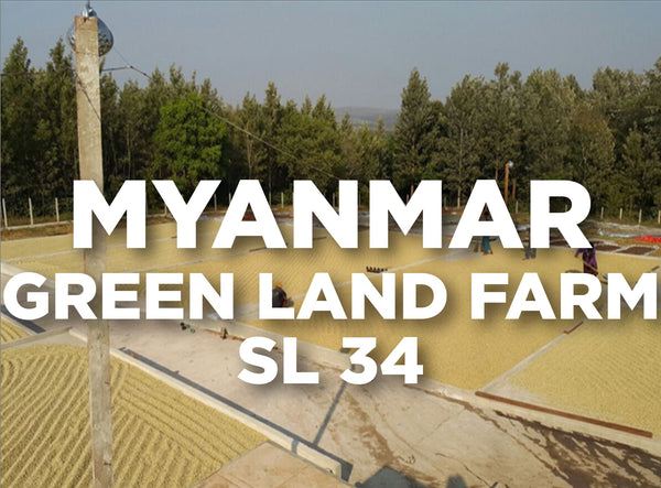 Myanmar Green Land Farm SL 34