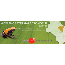 Load image into Gallery viewer, Adelphobates galactonotus - Standard Vivarium Label