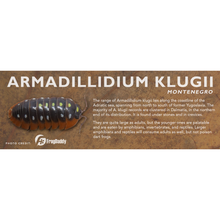 Load image into Gallery viewer, Armadillidium klugii - Isopod Label