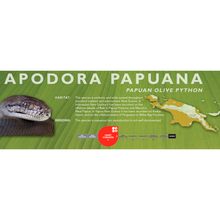 Load image into Gallery viewer, Papuan Olive Python (Liasis papuanus - Apodora papuana) Standard Vivarium Label