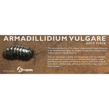 Load image into Gallery viewer, Armadillidium vulgare - Isopod Label