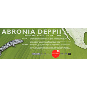 Deppe's Arboreal Alligator Lizard (Abronia deppii) Standard Vivarium Label