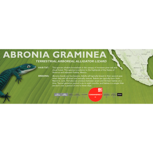 Terrestrial Arboreal Alligator Lizard (Abronia graminea) Standard Vivarium Label