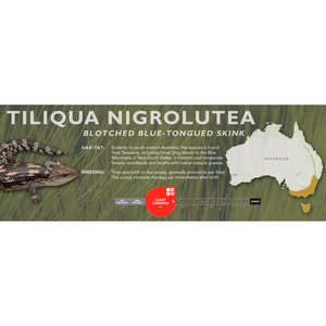 Blotched Blue-Tongued Skink (Tiliqua nigrolutea) Standard Vivarium Label