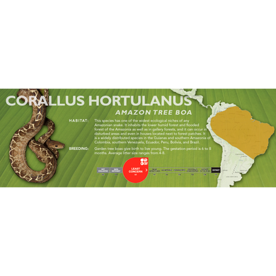 Amazon Tree Boa (Corallus hortulanus) Standard Vivarium Label