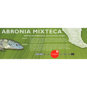 Mixtecan Arboreal Alligator Lizard (Abronia mixteca) Standard Vivarium Label