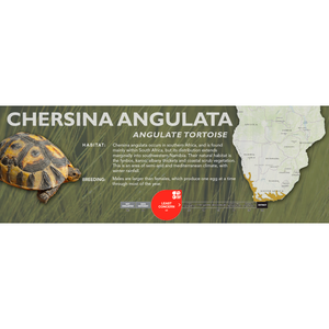 Angulate Tortoise (Chersina angulata) - Standard Vivarium Label
