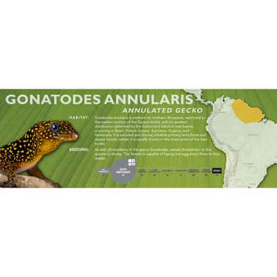 Annulated Gecko (Gonatodes annularis) Standard Vivarium Label
