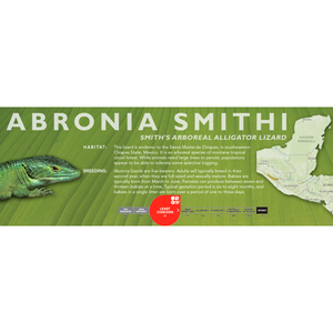 Smith's Arboreal Alligator Lizard (Abronia smithi) Standard Vivarium Label