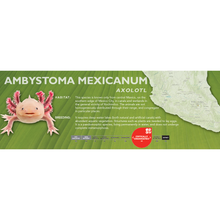 Load image into Gallery viewer, Axolotl (Ambystoma mexicanum) - Standard Vivarium Label