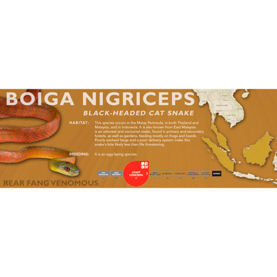 Black-Headed Cat Snake (Boiga nigriceps) Standard Vivarium Label