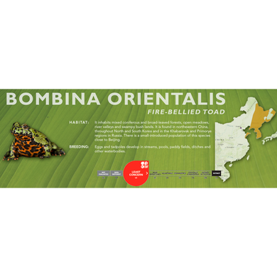 Fire-Bellied Toad (Bombina orientalis) - Standard Vivarium Label