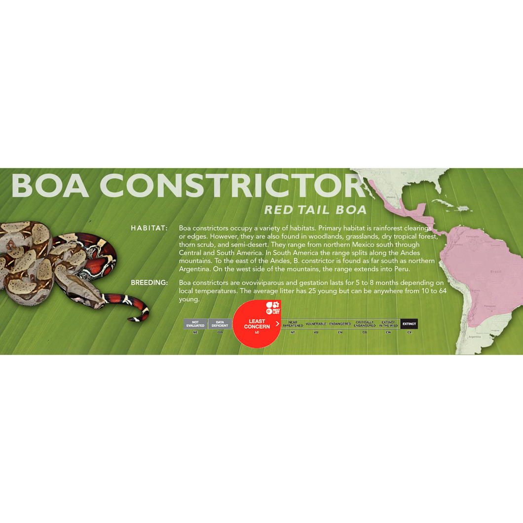 Red Tail Boa (Boa constrictor) Standard Vivarium Label