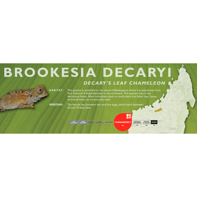 Decary's Leaf Chameleon (Brookesia decaryi) Standard Vivarium Label