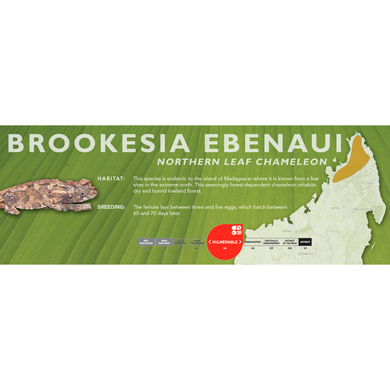 Northern Leaf Chameleon (Brookesia ebenaui) Standard Vivarium Label