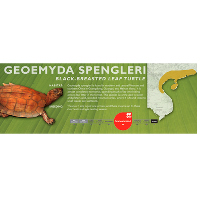 Black-Breasted Leaf Turtle (Geoemyda spengleri) - Standard Vivarium Label