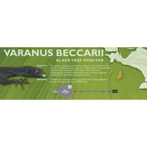 Black Tree Monitor (Varanus beccarii) Standard Vivarium Label
