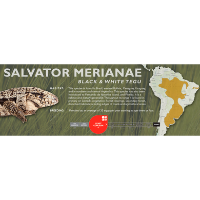 Black & White Tegu (Salvator merianae) Standard Vivarium Label